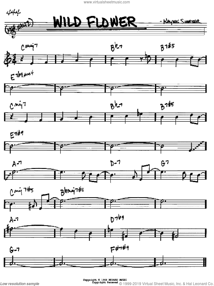 Wild Flower sheet music for voice and other instruments (Bb) by Wayne Shorter. Score Image Preview.